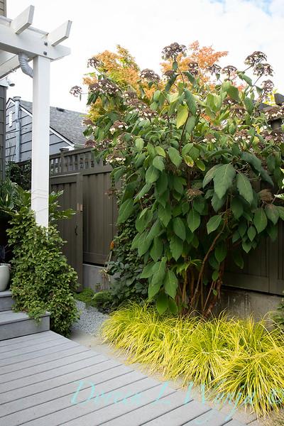 Lisa Bauer - designer's garden_1267.jpg