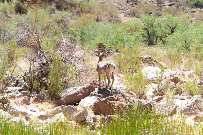 2014_Grand_Canyon_WHDW2_7D 46