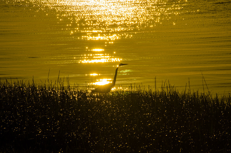 Early Morning Charleston Walk-21.JPG