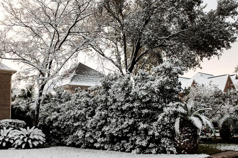 blizzard 2017-4137.jpg