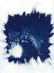 Cyanotype: Paper
