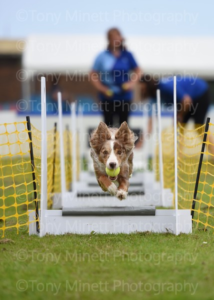 Yorkshire Bouncers Flyball 2019 part 2