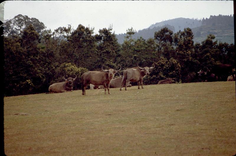 India1_113.jpg