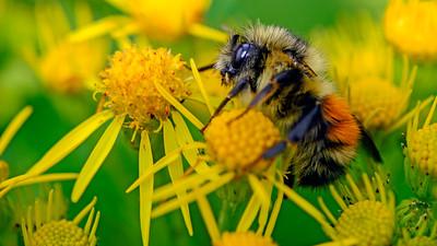 Washington Flowers, Foliage and Bugs