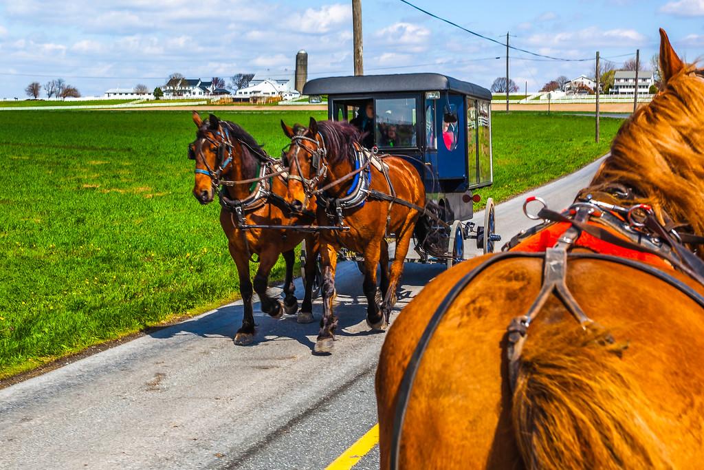 美国兰开斯特阿米什村(Lancaster Amish Village),特殊部落