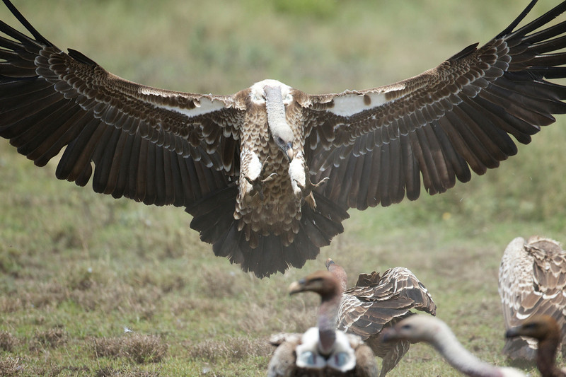 Serengeti_Feb_2013_FH0T6696.tiff.jpg
