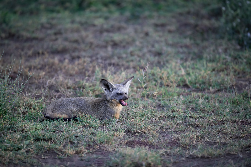 Tanzania_Feb_2018-445.jpg