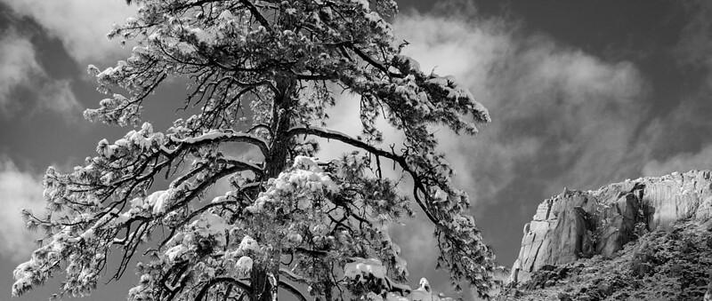 Ponderosa Pine and Granite Mountain