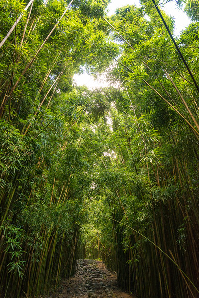 hawaii035.jpg