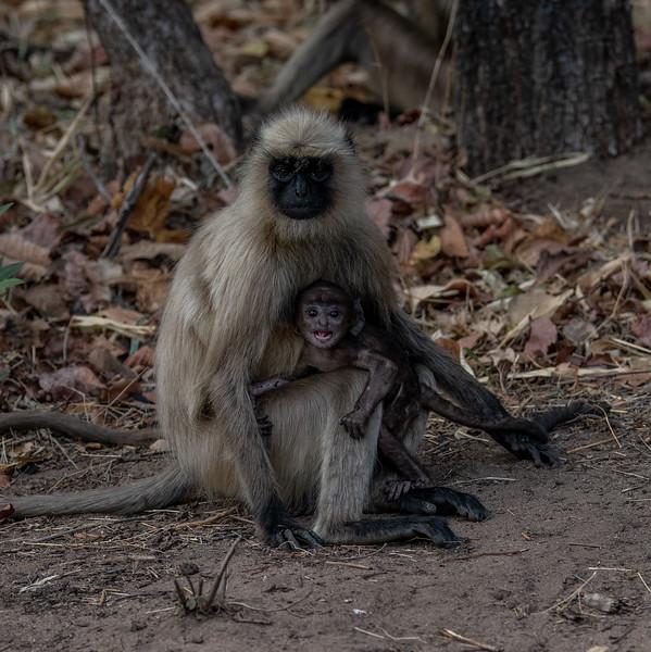 India_April_2019-2085.jpg