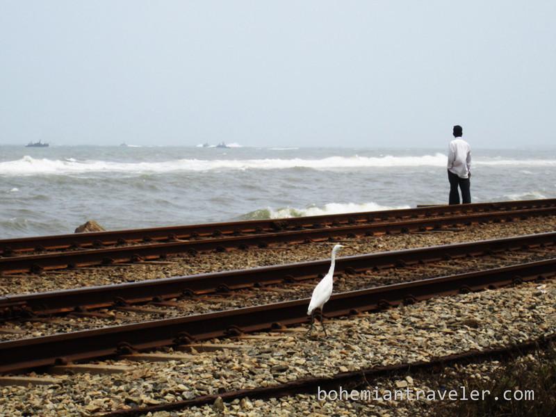 bird and man near railroad tracks.jpg