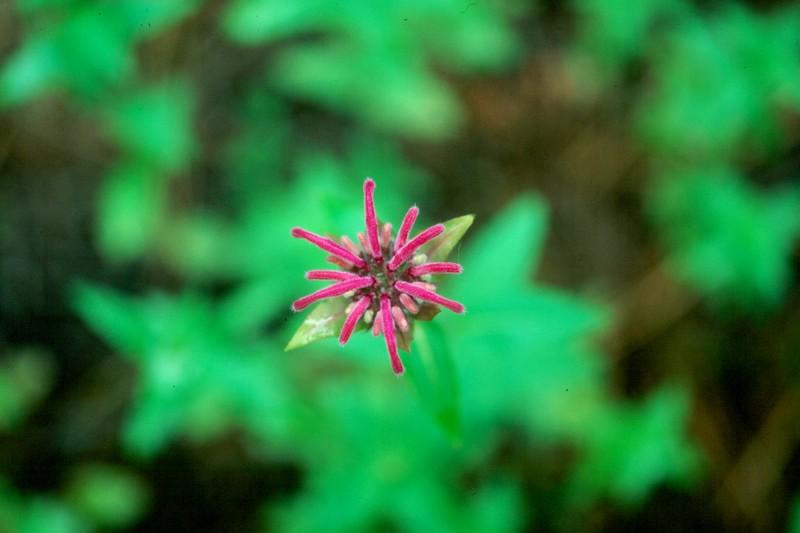 amh FLOWERS (1125).jpg