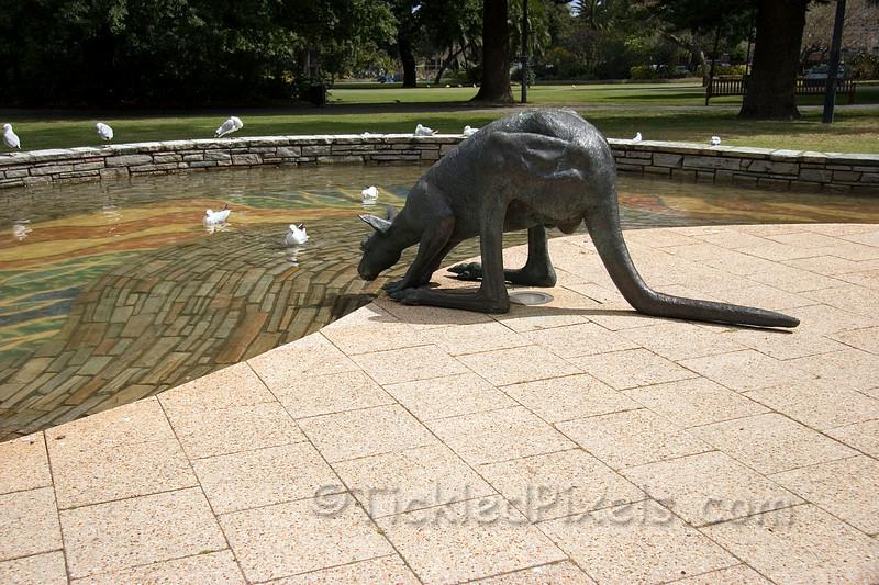 The Drinking Kangaroo