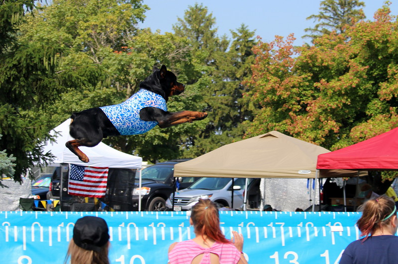 Dock Dogs at Fair-147.JPG