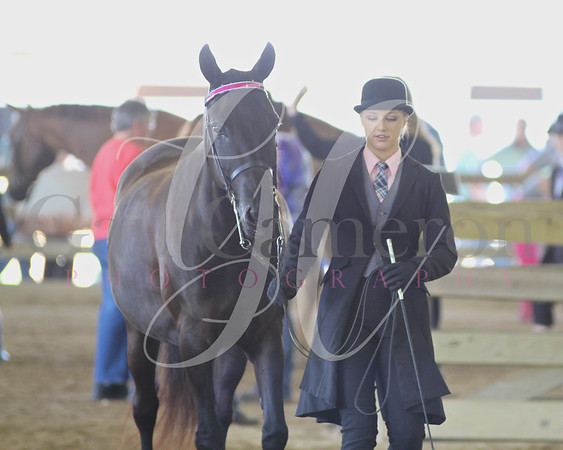 Saddle Seat Showmanship 10 - 13