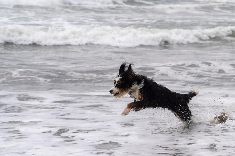 ocean beach quarantine 1225995-30-20.jpg