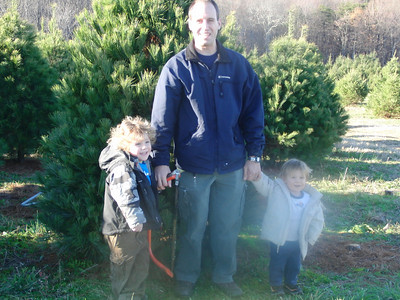 2010 - 11 - Christmas Tree Harvest