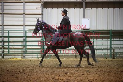 Class 11 Saddle Horse Pleasure - Adults