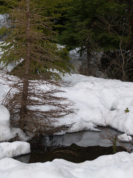 still snowy in Lake Louise, late May (2007)