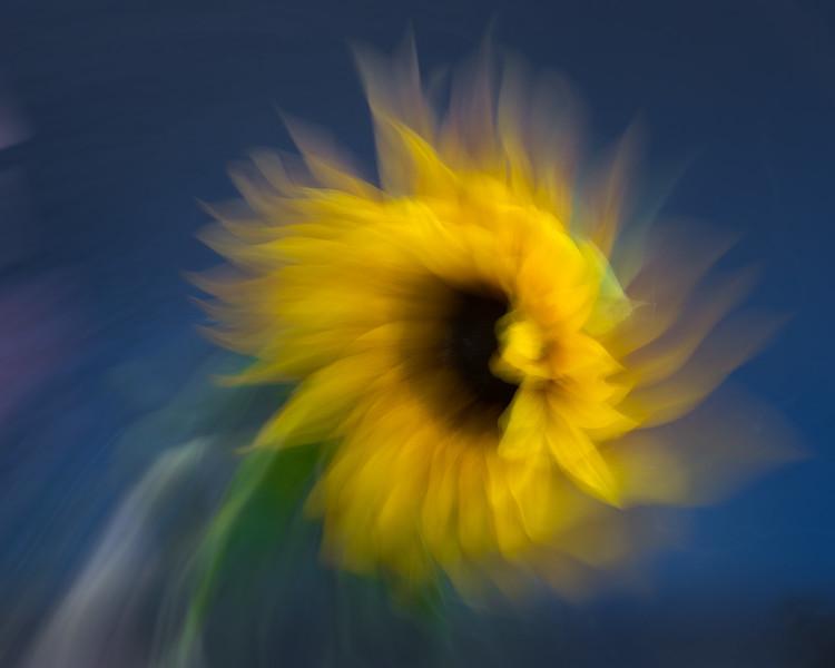 Sunflower Animism