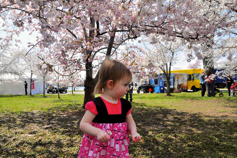 Cherry Blossoms 2014 059.jpg