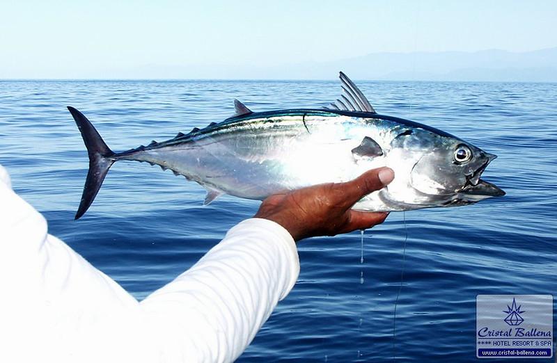 Tours-Sport-Fishing2_0600px-wm.jpg