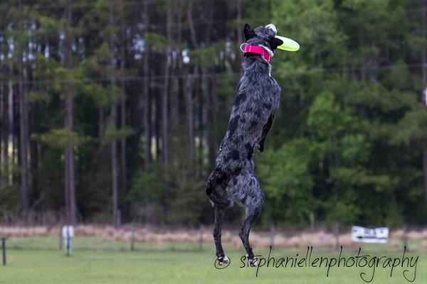 _MG_3176Up_dog_International_2016_StephaniellenPhotography.jpg