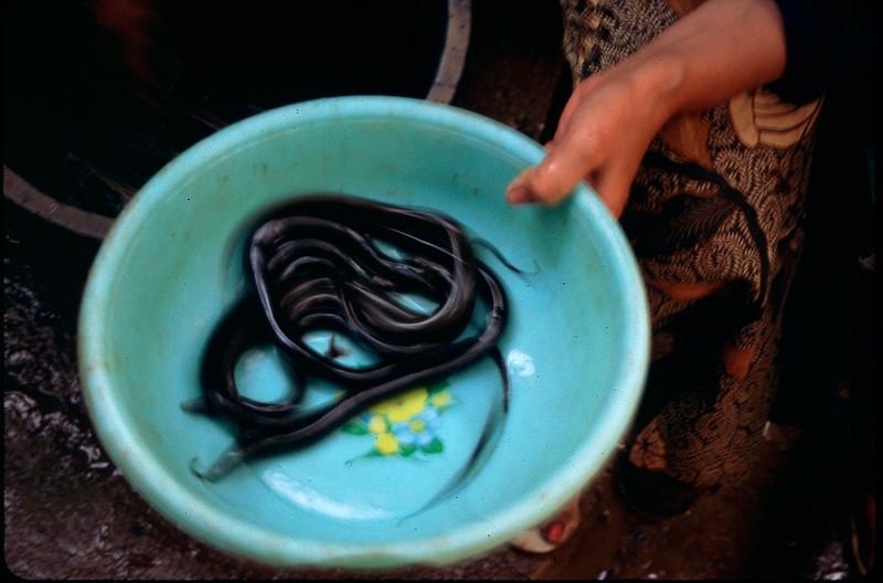 eels for sale