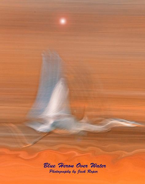 Blue Heron in flight low .jpg
