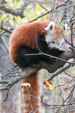 Bronx Zoo 10-26-19