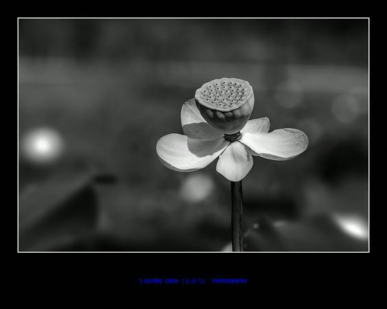 _MG_8969-ps-M.jpg