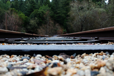 redwoods and railroads