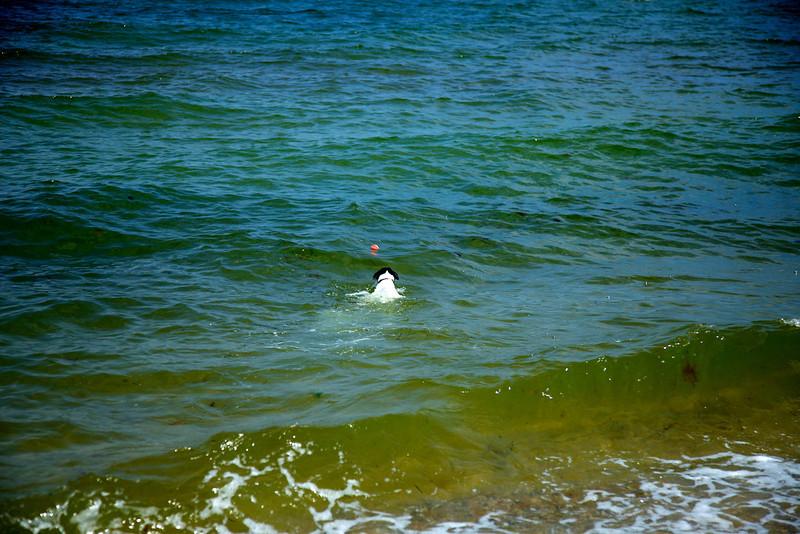 Cape Cod 2011 66.jpg