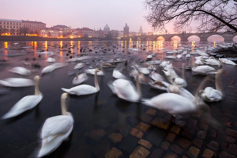 Prague_DSC8971.jpg