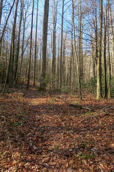 Seniard Ridge Trail -- 3,500'