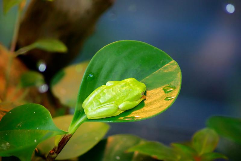 Sleeping Frog A day at the California Academy of Sciences ref: 73ac13b9-6aee-45a0-87b1-0c86cb9b906b