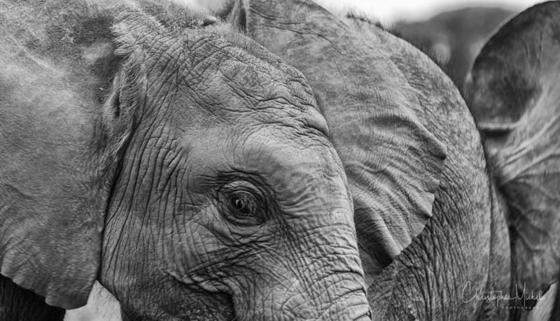Aug312013_nairobi_blixen_elephant_2221.jpg