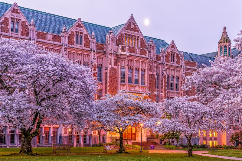 UW Cherry Blossoms - 2021.jpg