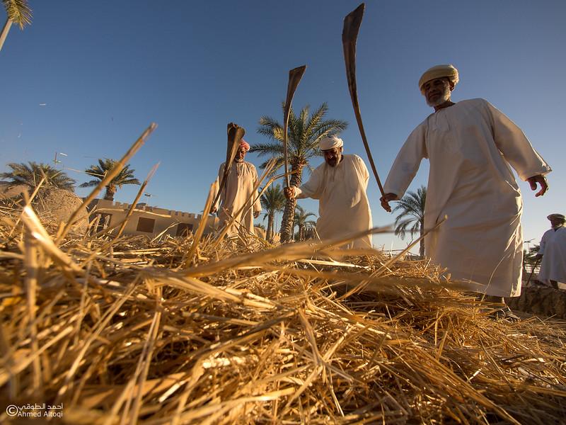 P1190223-Edit- Oman.jpg