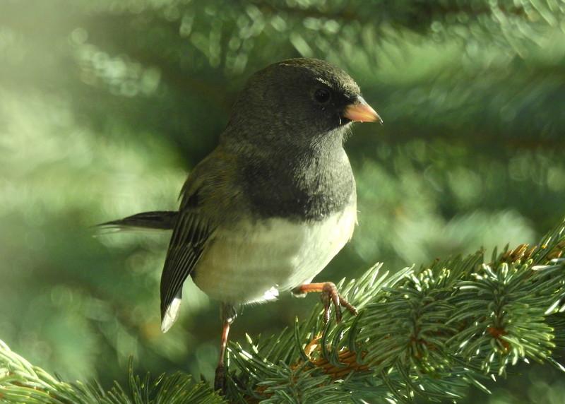 birds (203).JPG