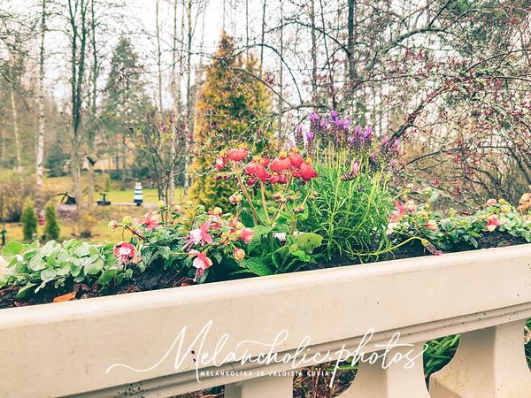 Taikalaakson puutarhan kevät ostoksia
