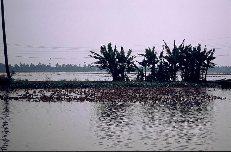 India2_045.jpg