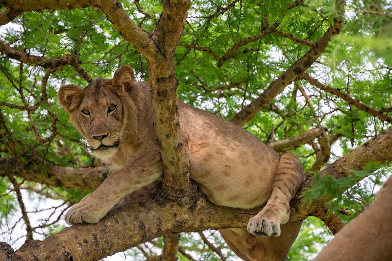 Uganda_T_QE-1169.jpg