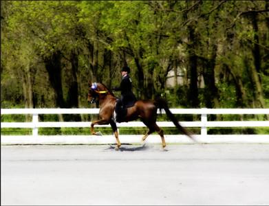 2013 Horse Show Season
