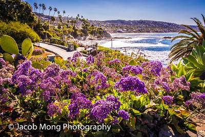Laguna Beach:  April 16, 2016