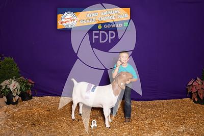 Boer Goat Shows