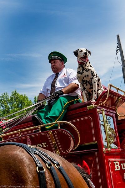 20130519EP_Budweiser_Clydesdales-124.jpg