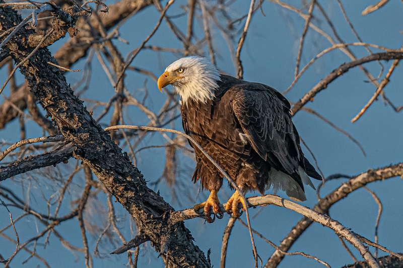 20190701Eagles 7-1-16DSC_4490.jpeg