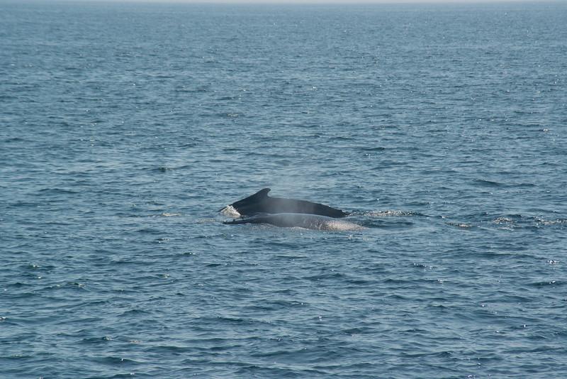 humpbacks-4098.jpg