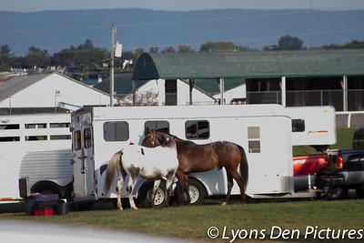 Great Frederick Fair 4-H/FFA Western Horse & Pony show